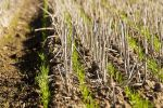Resource released to help with nitrogen decision-making in season 2020