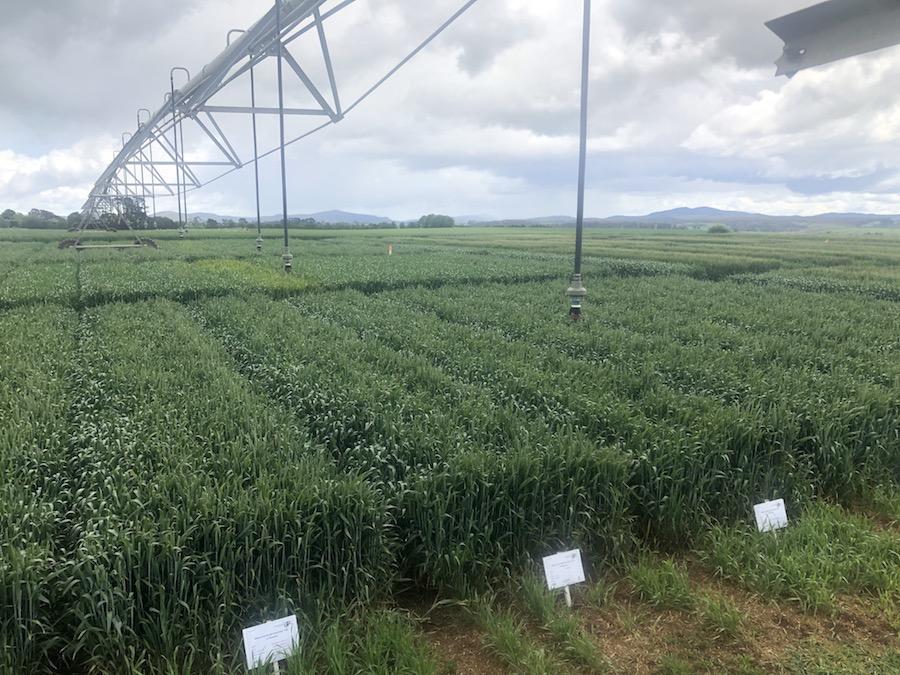 Irrigators over experimental trial plots