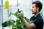 Gene discovery to fight canola crop virus