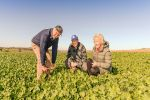 Grain-and-graze canola proves a 'game changer'
