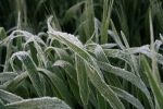 Strategic approaches to managing frost risk and impact