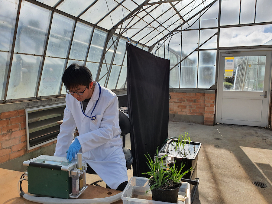 Researcher in greenhouse trials