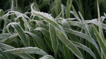 Develop a personalised frost plan at workshops
