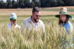 Wheat breeding tool set to optimise energy use efficiency