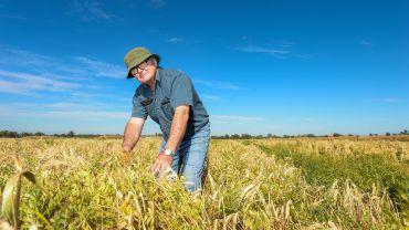 Vetch trialled as a dual-purpose break crop