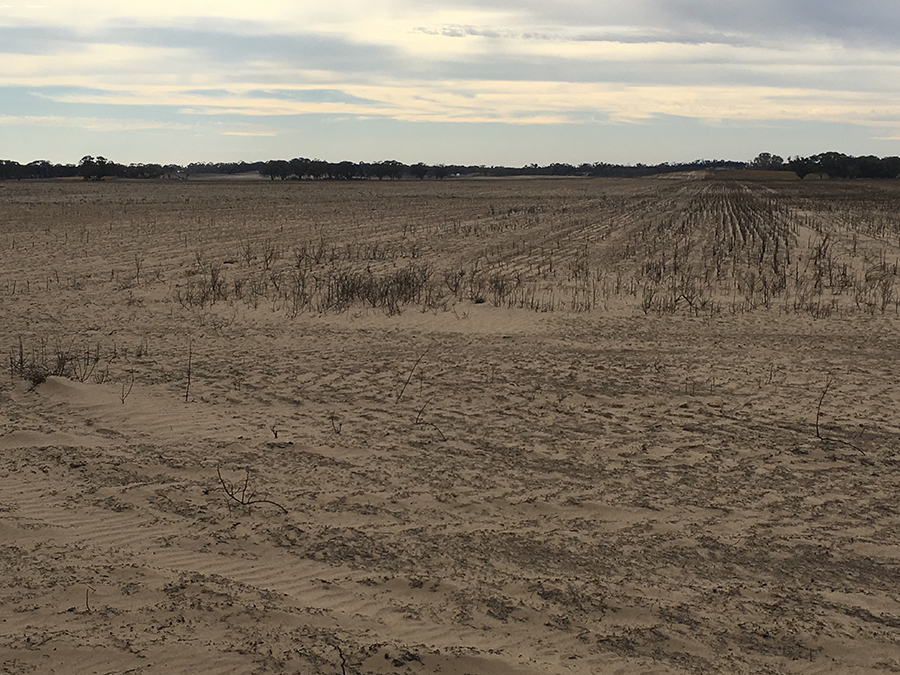 Burnt non-wetting sands prone to erosion two days after the 2018 fire.