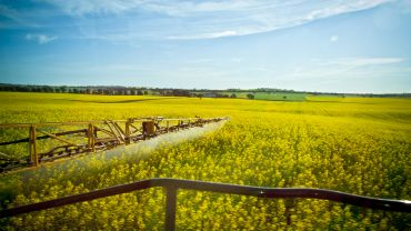 Do canola fungicide applications always pay?