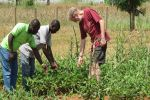 CSIRO lends a hand in developing insect-resistant cowpea for Nigerian farmers