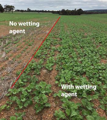 Wetting agents can improve crop establishment