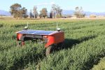Robotic 'green-on-green' mechanical weeder tested in the field