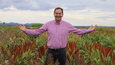 On-farm impacts of sorghum RD&E spanning 20 years surface from economic analysis