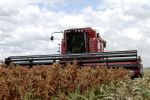 Tips for harvesting high moisture sorghum this season