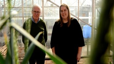 Fortified wheats show promise on sodic soils
