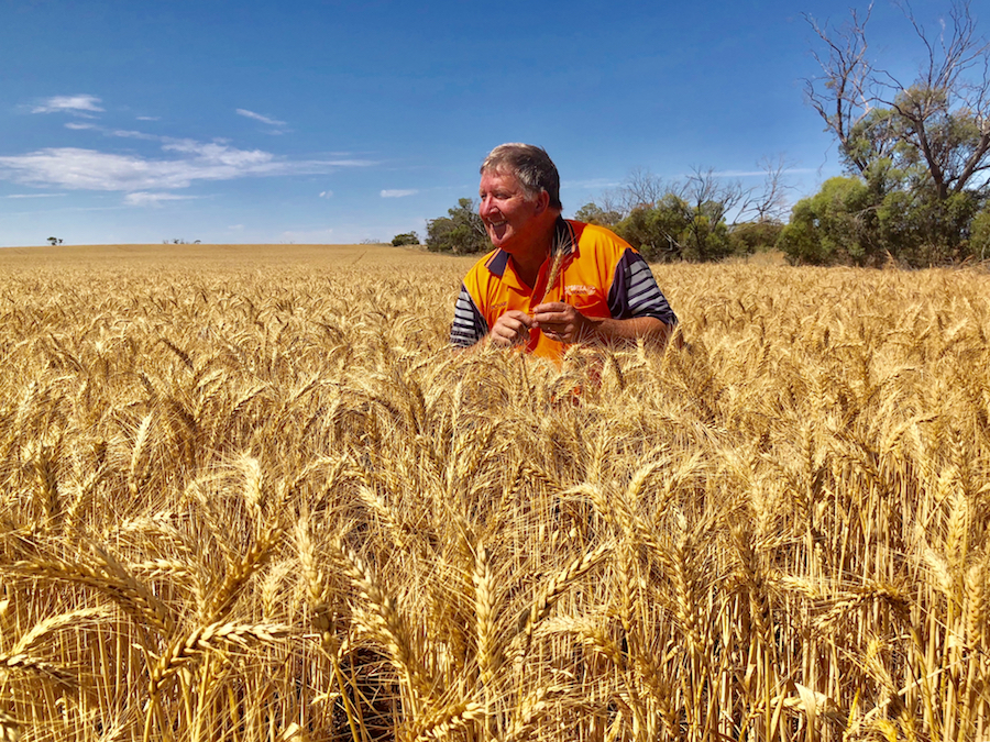 Richard Konzag in a wheat crop at Mallala, South Australia