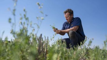 Pasture legumes offer protein boost for subsequent cereals