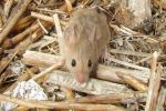 Pests in the spotlight of innovative national biosecurity research projects