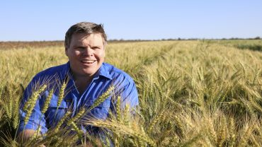 Valuable learnings from wheat phenology research
