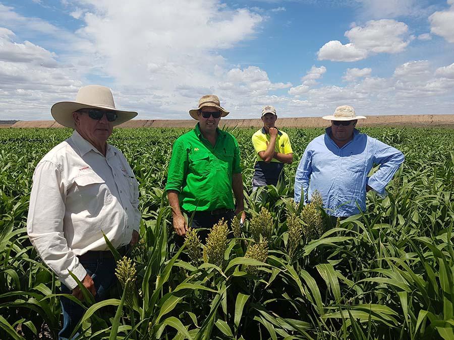 Northern region sorghum growers, left to right, Gordon Ricketts, Tim English, Matthew Thompson and Matthew Barnes. PHOTO Joe Eyres