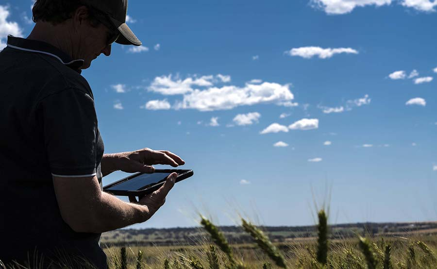The CropPhen and FrostSENSE projects will develop new analytics approaches to spatially map frost damage and crop phenology on-farm to aid agronomic decision-making by growers and consultants. PHOTO David Fulwood