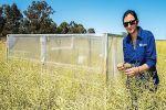 GRDC-DPI partnership strengthens agronomy, pathology research