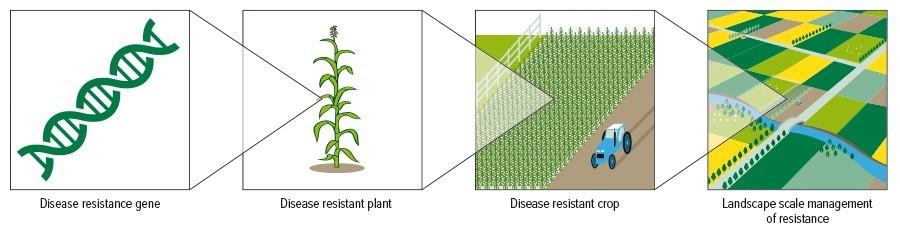 graphic strategic crop rotation