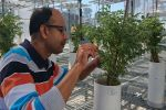 Drought research probes roots–soil bond