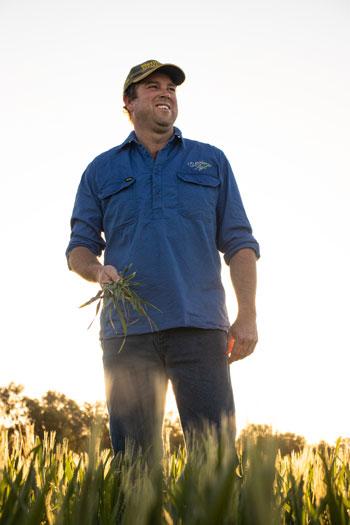 Luke Bradley stands in his 2020 wheat crop