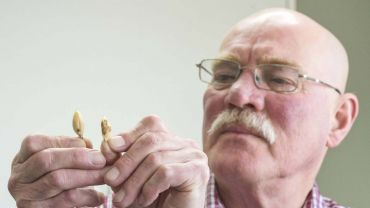 Adept fungal disease could impact northern chickpea growers if conditions are wet