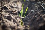 GRDC boosts nutrient knowledge