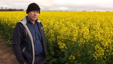 Read up on golden rules for growing canola