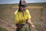 Researchers work to develop pastures suited to WA's eastern wheatbelt