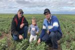 On-farm pulse push at Pyramid Hill in north-central Victoria