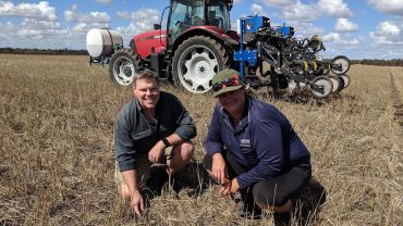 Sowing sorghum in spring offers growers farming system benefits