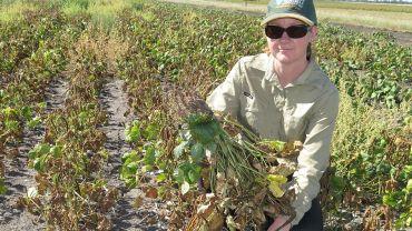 Crop disease surveillance continues despite COVID-19