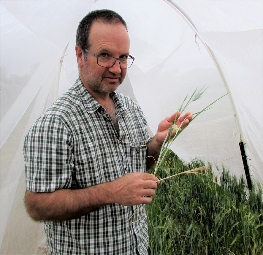 SARDI entomologist Maarten van Helden