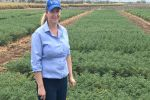 New chickpea offers regional balance