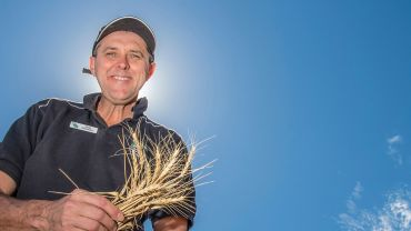 Are long coleoptile wheats an early sowing game-changer?