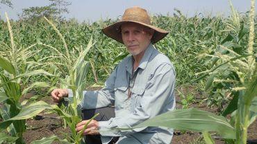Researchers discover hidden diversity of downy mildews