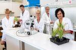 Gene pool for yellow spot resistance expands