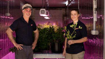 Peanut breeding enters new era