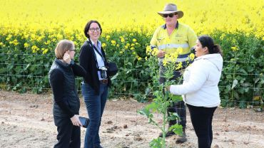 Novel analysis to improve utility of on-farm research