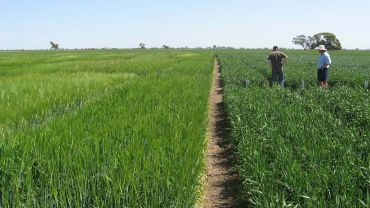 GRDC-invested NVT assists growers to optimise cropping profitability