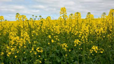 Alternative weed control methods are becoming increasingly popular in Australia