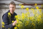 Investment in screening program to help fight canola devastation caused by blackleg
