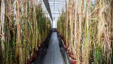 PBRI participates in a global collaboration for plant health