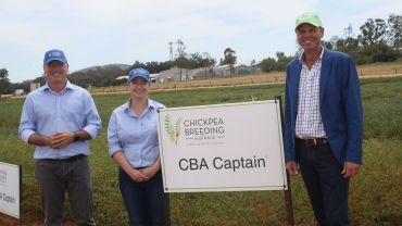 National program for chickpea breeding launched