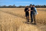 Yield and crown rot tolerance targeted