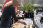 Opportunities to expand blackleg resistance pool