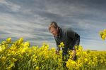 Cold, wet winter causes rise in canola disease