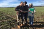 New tool guides Russian wheat aphid management